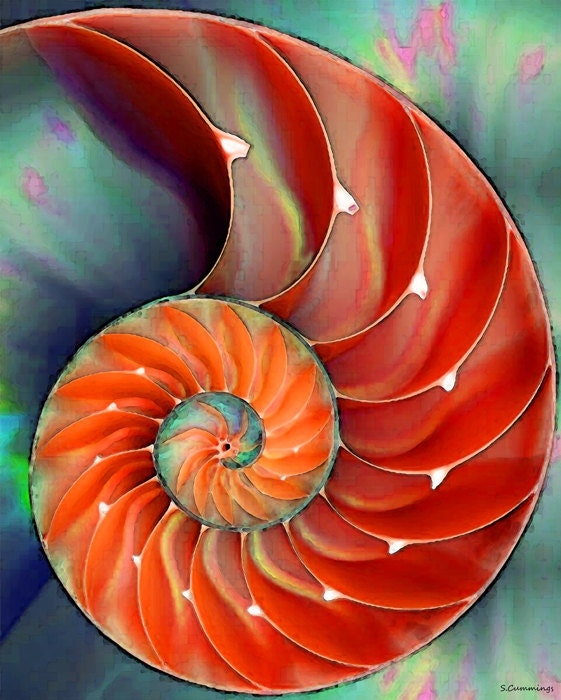 Nautilus Shell Art Print From Painting Colorful Red Beach Ocean Sea