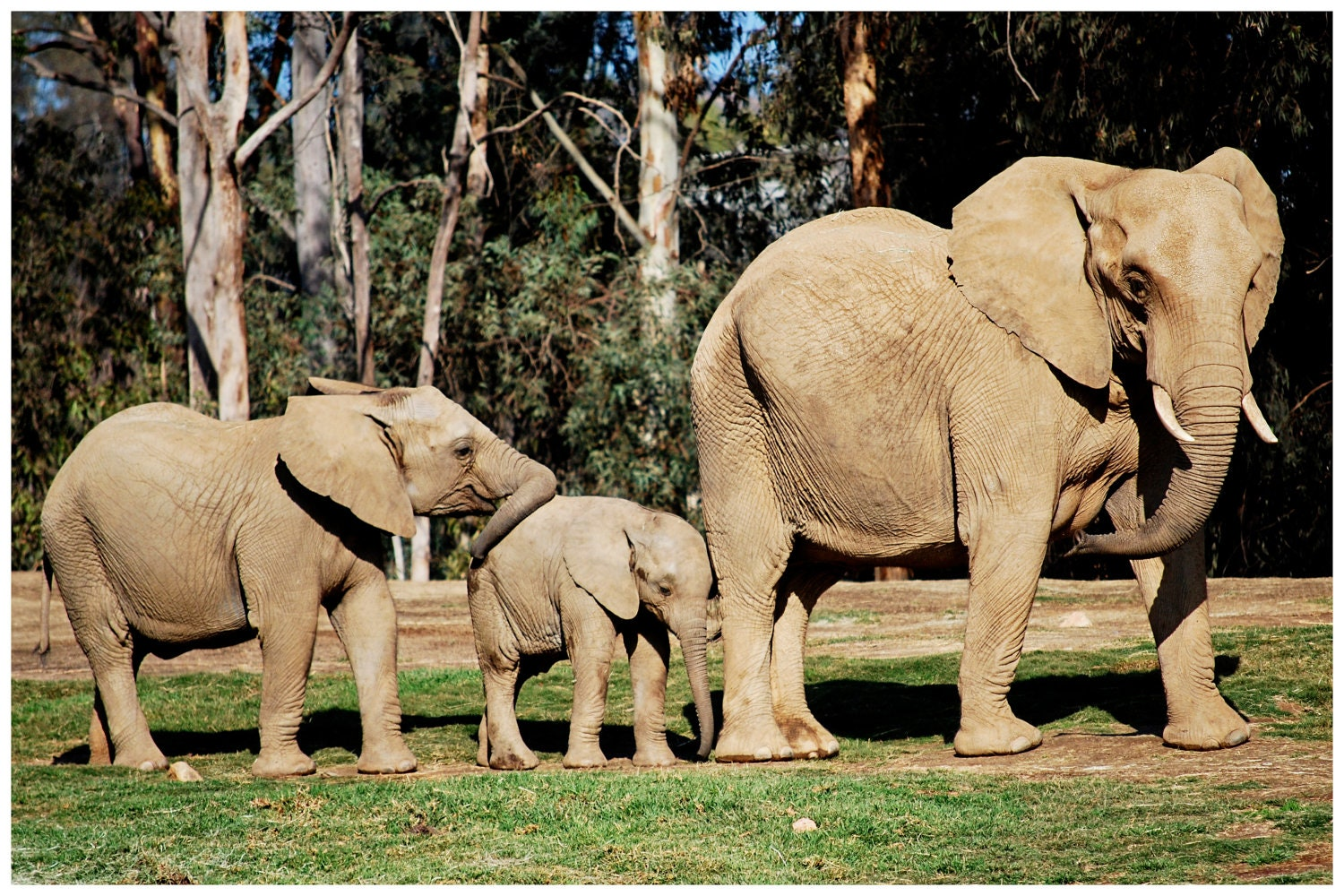 Elephant Family, World Elephant Day Fundraiser