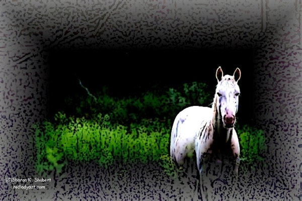 White Horse in Pasture Abstract Giclee Print 8 x 10