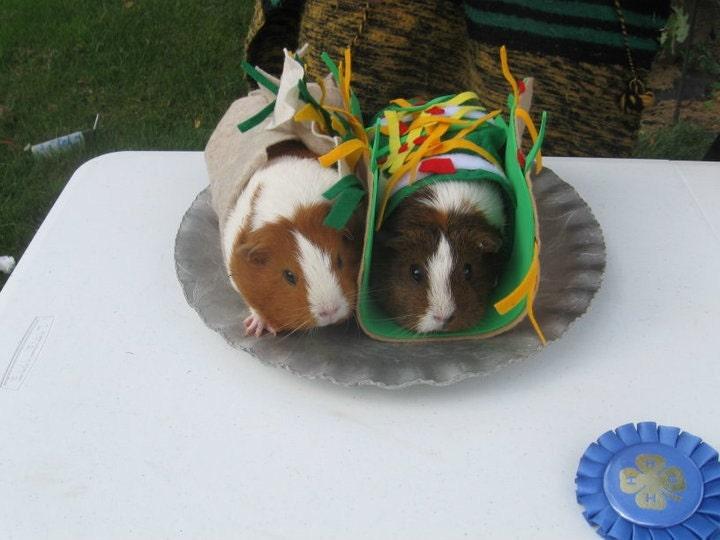 Guinea Pig Costume - Dress Your Cavy - Taco and Burrito