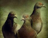 Birds Of The Apocalypse - 5x5 signed print