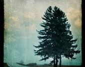 Three 5x5 Prints of Pine Series