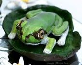 Frog Figurine Polymer Clay Scene Sculpture on Mirror Pond OOAK