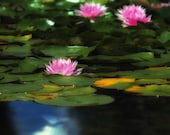 Water Lily Pond - Fine Art Photography