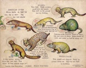 1914 Antique Puzzle of a FERRET and other ANIMALS