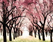 Wonderland - a girlie girly girl gift idea. for her. for a nursery.  pastel pink cherry blossoms and creamy muted lime green grass - a  whimsical photograph -  A Think Pink Fine Art Nature Print (8x8)