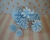 Baby Powder Blue Pinecones
