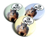 Oh Nuts - squirrel pinback button (QTY 1)
