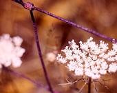 Seasons - 8x8 Fine Art Photograph