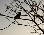 Alone On The Branch 7 x 10 Inch Fine Art Photograph Print