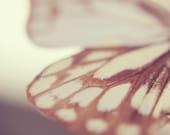 Flutter 8x8