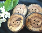 4 Beautiful Oak Wood Tree Branch Buttons ...2 1/4 to 2 1/2 Inch... - Wooden Buttons for your Knitting, Crochet or Sewing
