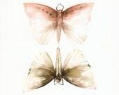Pink and Mocha Moths- Original Watercolor Painting