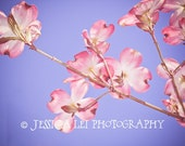 Dogwood No.1  - An 8X10 Photographic Art Print