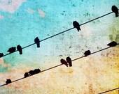Tweet, Fine Art Bird Photography Print 10x10 - BOGO
