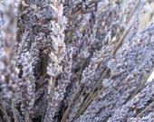 Organic  Dried Lavender 20 bunches  Grown in Northern California