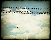 Many and One (Birds on a Line), 8x10 Fine Art Photograph by Tricia McKellar, Modern Photograph with Vintage Look