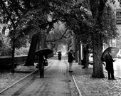 Rainy Day in Central Park NYC 20x20 Photograph on Canvas