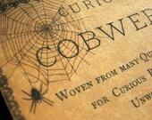 Curious Cobwebs