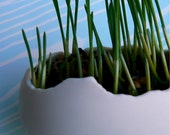 Egg Sprouts.... Porcelain grow your own wheatgrass kit...