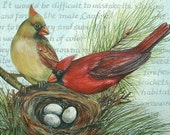 Framed Original Painting Nesting Cardinals