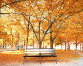 IN STOCK  A Walk In The Park-8x10 Fine Art Photo of beautiful autumn trees and a park bench