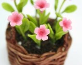 English Cottage Flowers, Pink Primrose in weaving basket