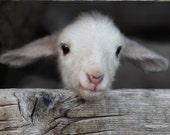 hello  world - fine lamb photography (and so farm fresh) - 8x8 image