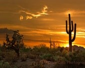 Greeting Cards, Desert Sunsets Fine Art Photographs set of 4 Note Cards