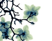 ON SALE Save 33% Translucence (8x10) Fine Art Flower Photograph