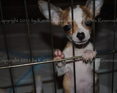 Hope - Photograph - U Choose Size - Animal Rescue Charity Donation