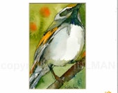 "Bird Painting, watercolor of wildlife art Golden Winged Warbler 8x10"" with FREE white mat"
