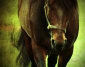 Bogo Sale Horse Moves equine fine art photography print 10x10