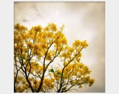 Sunshine on a Cloudy Day: square fine art photograph print of golden yellow flowering tree against gloomy gray sky - UninventedColors
