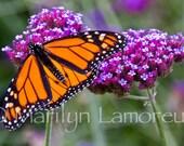 Artist Barbara Rosenzweigs Blog Art Gardening Photography And