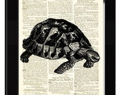 Turtle Tortoise Dictionary Print Made From Antique Illustration Engraving and Antique Dictionary Page