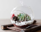 Red ruby succulent hanging terrarium