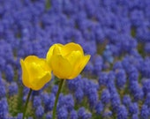 yellow on blue - photography print - baumkuchenpower