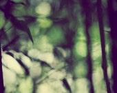 Abstract Bamboo - Large Fine Art Nature Photograph Print - Metallic - (24x30) - Avacado Green Deocr