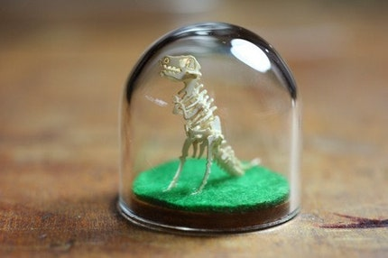 Completed T-Rex in Glass Bell Jar