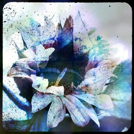 Winter Bloom 8x8 Inch Square Fine Art Photo