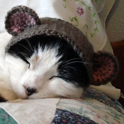 Pet Hat - Bear