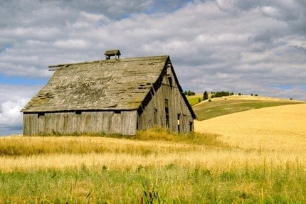 Grey Weathered Barn at Harvest Time Photo by Pam Lefcourt