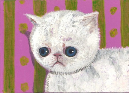depressed cat postcard allergies itchy white kitty