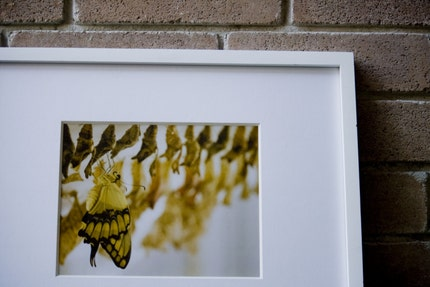 Yellow Butterfly Photograph