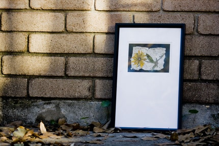 Framed Bontanical Black Eyed Susan photograph matte