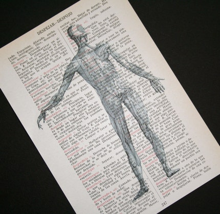 Anatomical Muscle Man on Spanish Dictionary - 5 x 7