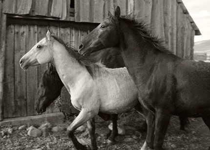 Horses Run 5x7 Fine Art Photograph