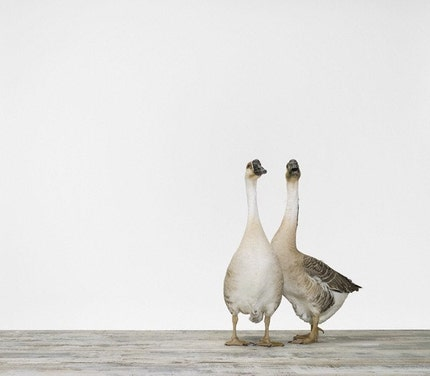 Two Geese No. 2, 7 x 8 Fine Art Print
