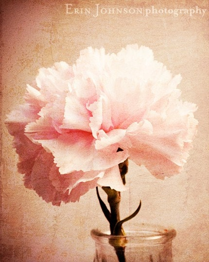 Pink Carnation -Flower Photograph-Fine Art Print 8x10 IN STOCK